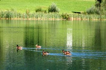 Hotel Preddvor Lake